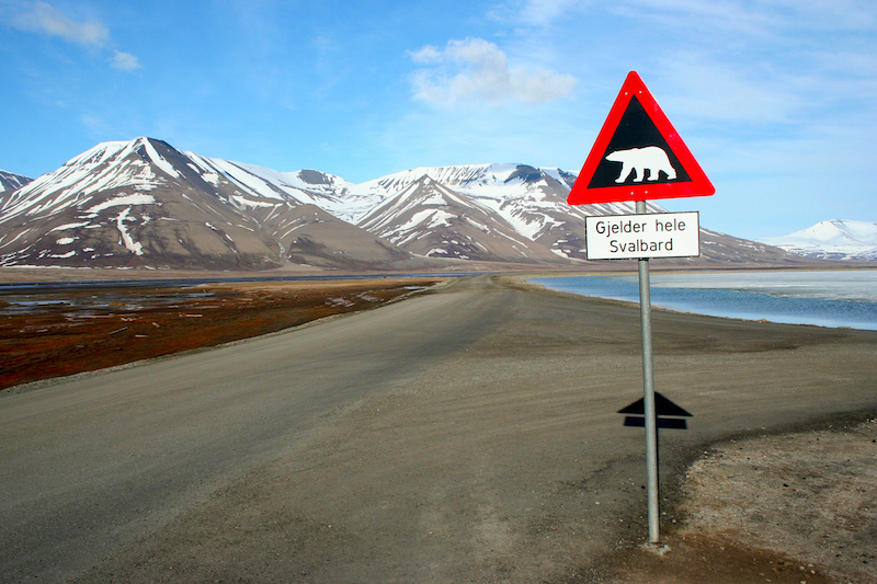 polar bear warning sign in longyearbyen
