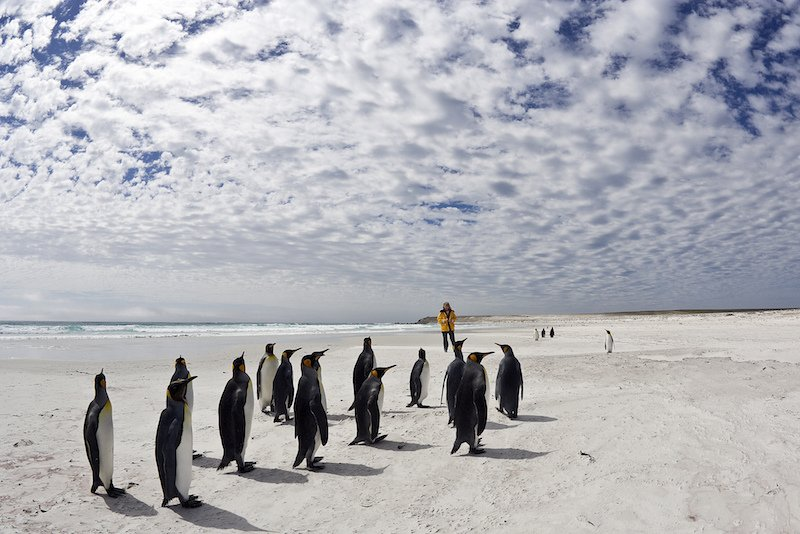 Walking with penguins in the Falklands