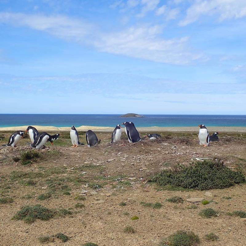 hiking in the falklands