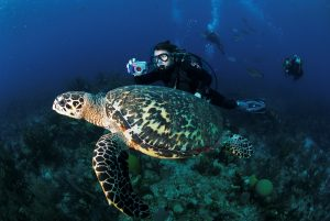 Diving, belize barrier reef, best things to do in belize