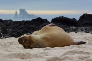 galapagos sea lion best adventures in the Americas