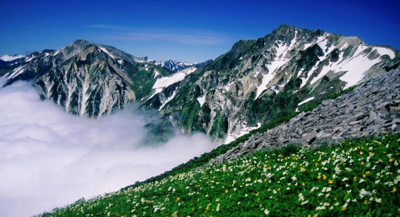 Wildflowers on the slopes of Mount Shirouma in the Hakuba, one of the best regions to go hiking in Japan
