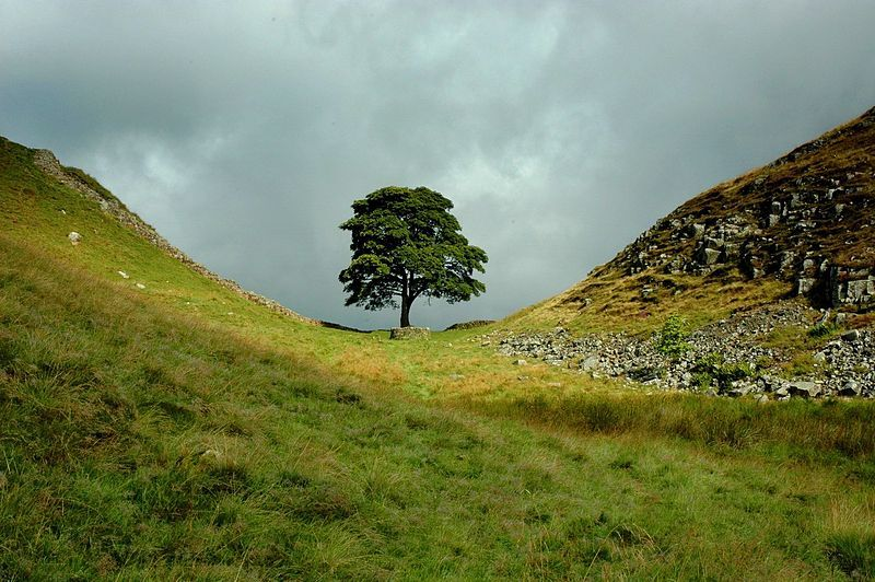 Sycamore Gap on Hadrians wall long-distance hikes in the UK