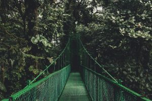 A suspension bridge in the costa rican cloud froest reserve, one of the best hiking destinations for winter sun