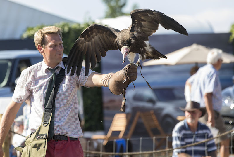 Falconry display at Countryfile Live