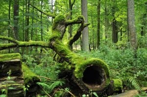Bialowieza National Park, oldest forest in Europe, best things to do in Poland