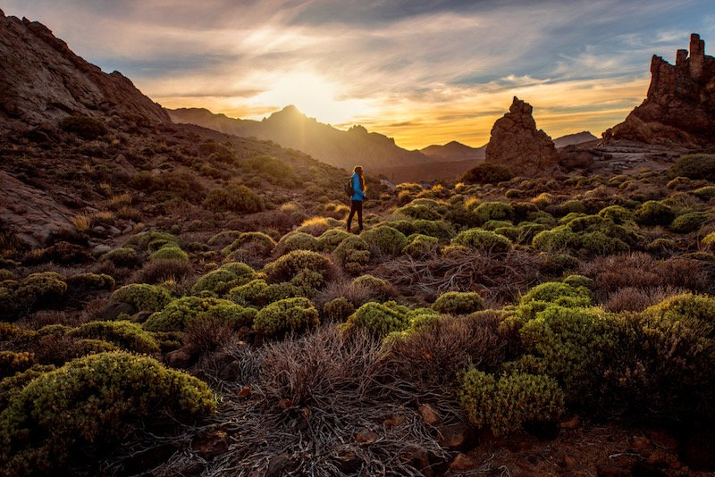 Beautiful rocky landscape with green bushes in Teide park on Tenerife island on the sunset