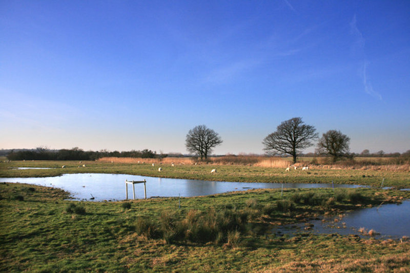 A view from the Wetlands watch at the Otmoor Nature reserve, best cotswolds walks