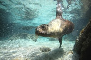 Sea lion underwater, Galapagos Islands, best tours to go on in 2020