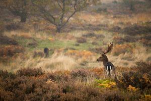 autumn photography deer