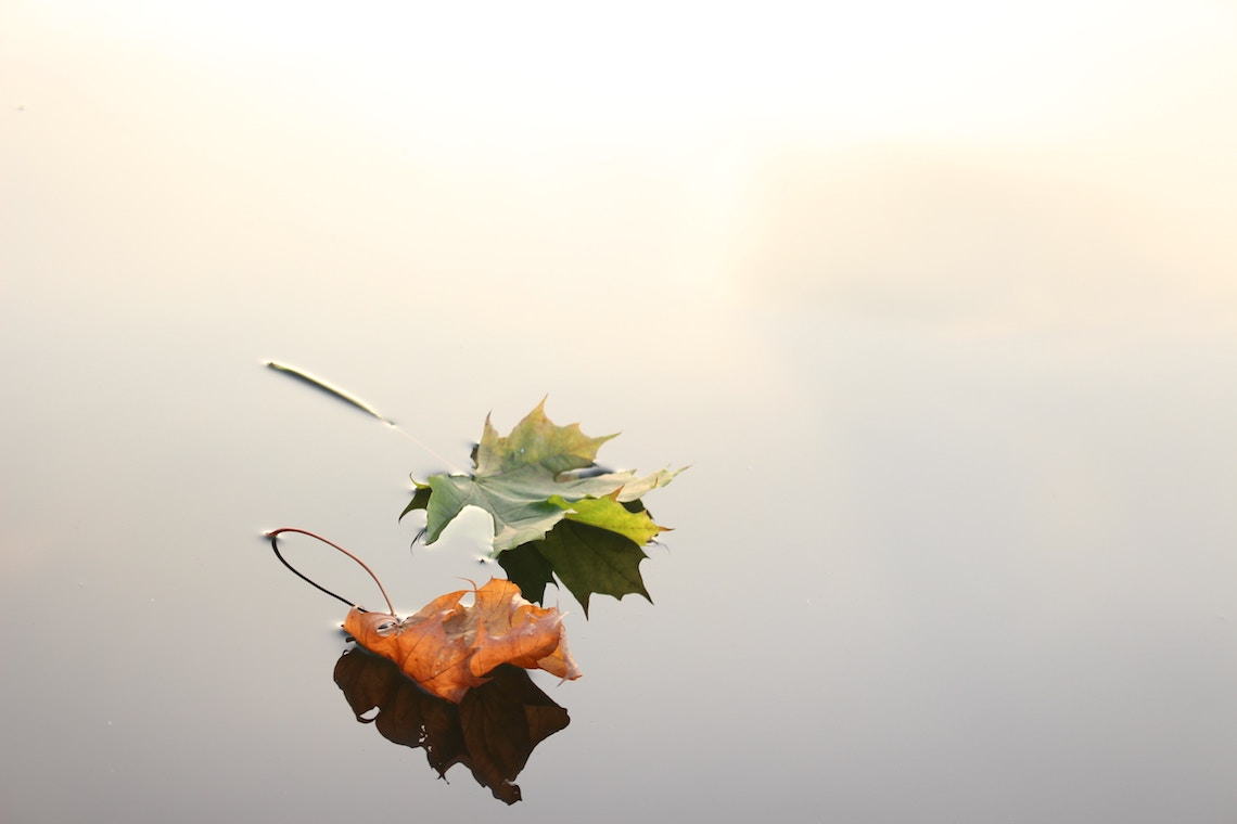 leaf on water autumn photography