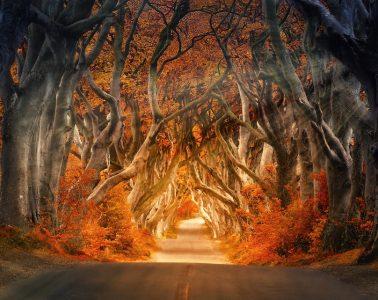 Autumn Photography trees light