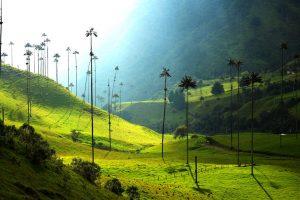 Undiscovered colombia valle de cocora best off-the-beaten-path adventures