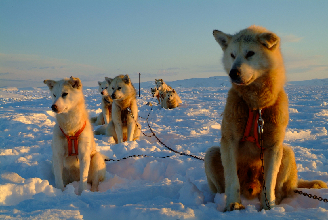 Dog sledding in East Greenland