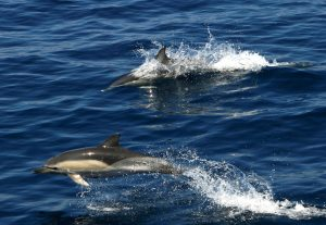 Dolphins at alonissos marine park best places in Greece for wildlife