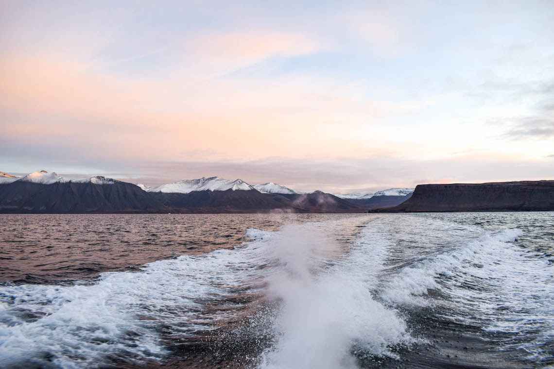 Whale watching in the Westfjords
