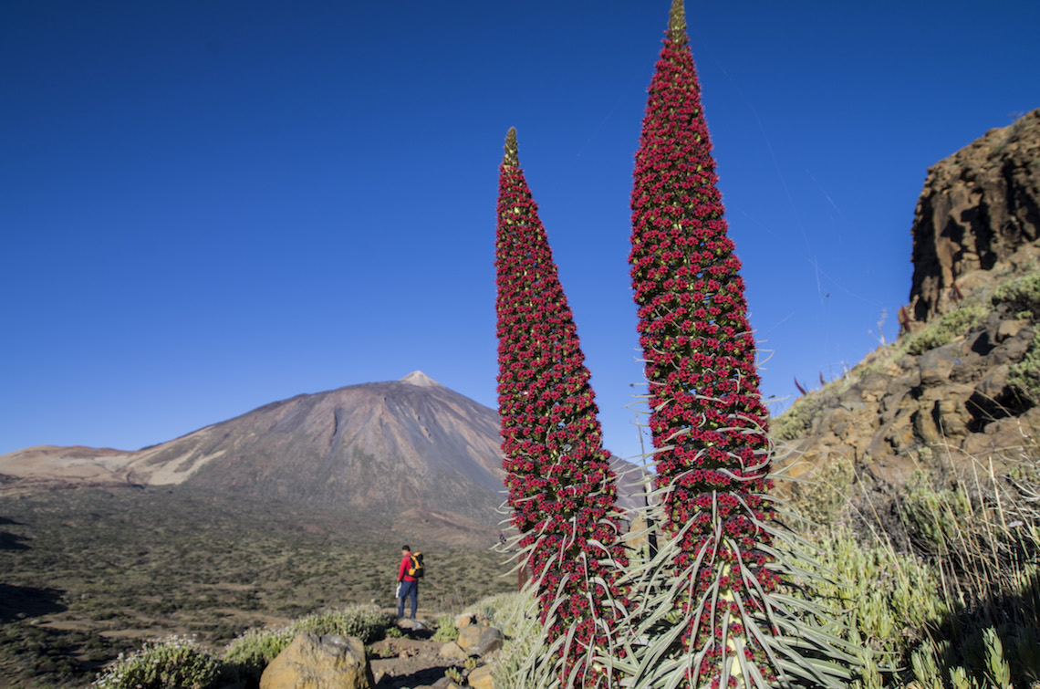La Fortaleza best hikes in Tenerife