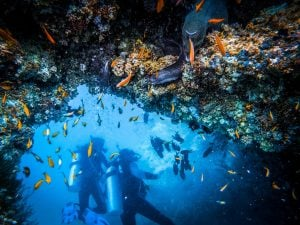Scuba divers on a reef in Tenerife