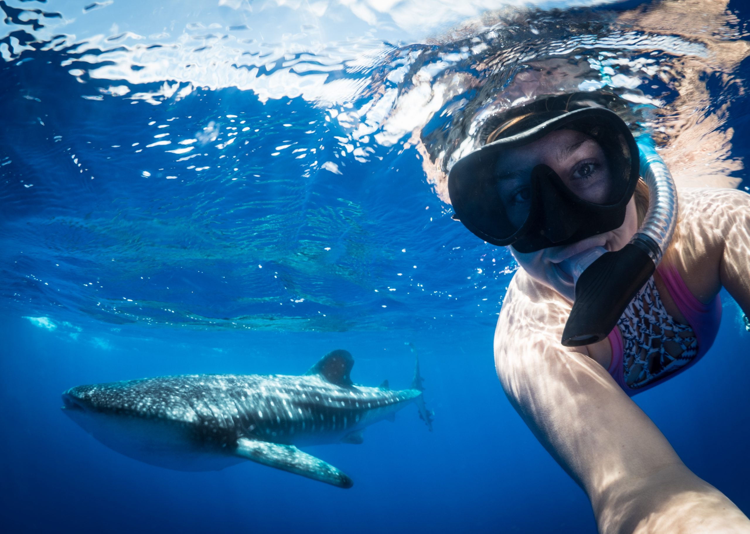 Snorkelling with whale sharks
