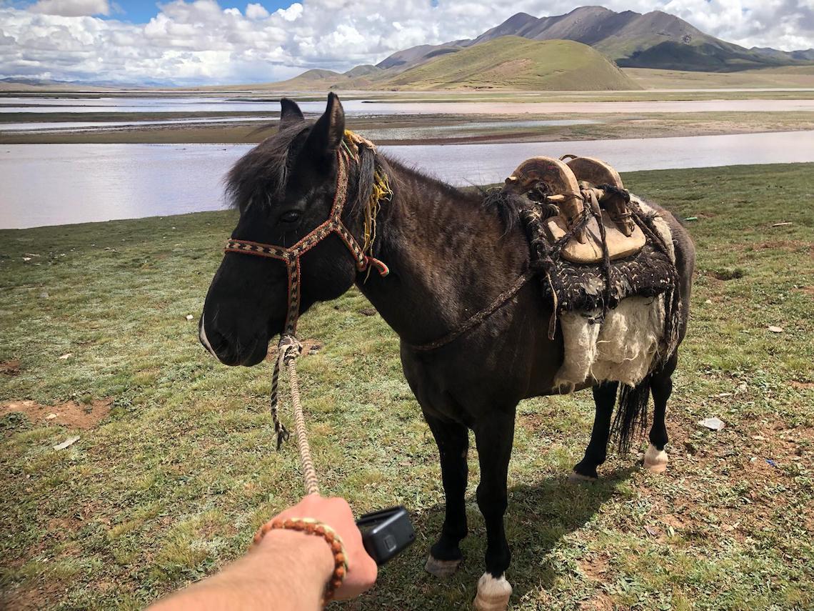 Castor Troy horse
