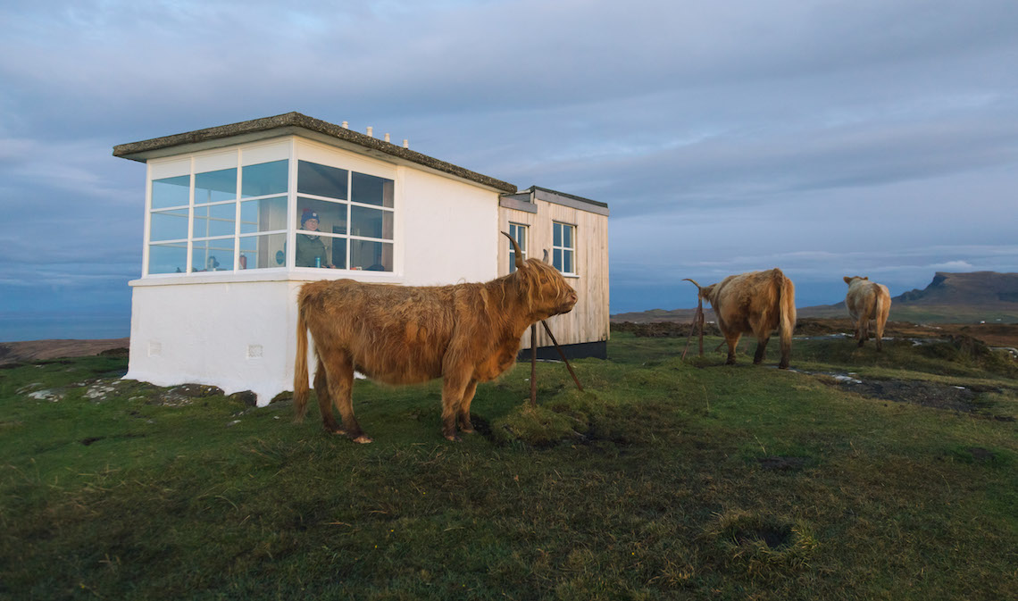 Highland Cows on the skye Trail