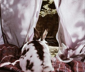 A rabbit in a tent in the garden