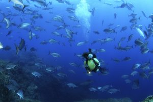diving in the azores