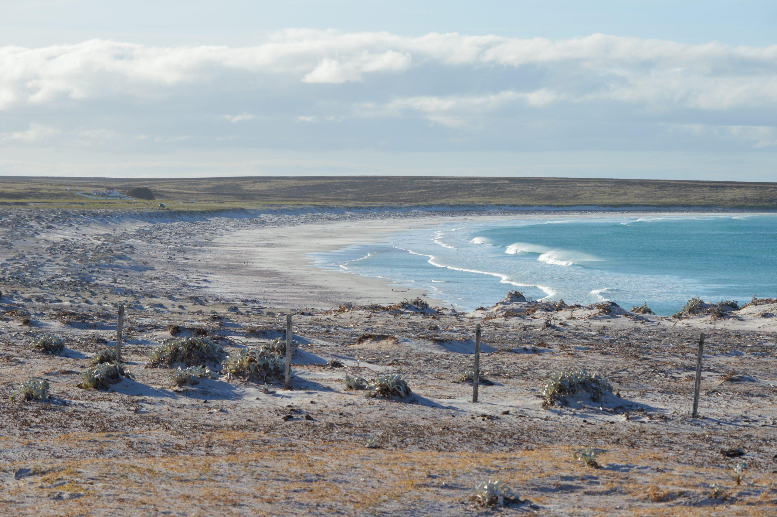 Visit Volunteer Point Falklands