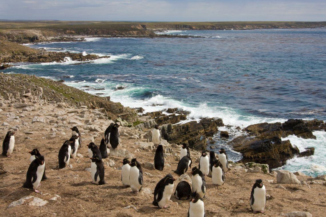 Falklands-Sandbar-Island-Rockhopper-penguins